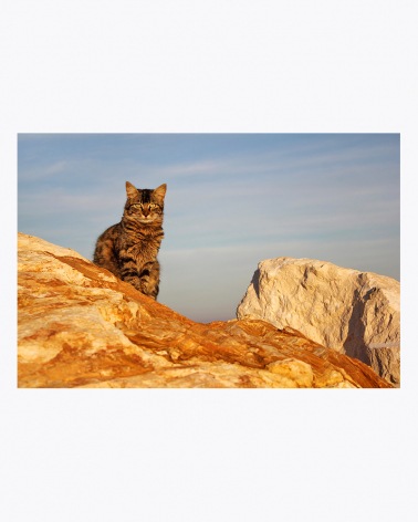 Tabarca Cat Fine Art Print Alicante